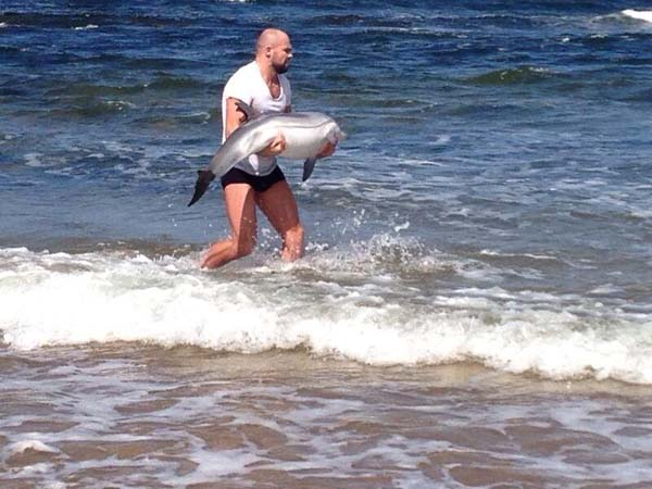 A brave man marched out to see to rescue a beached baby dolphin.